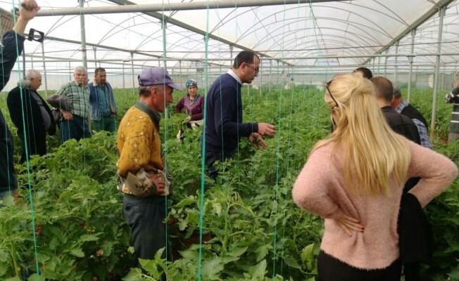 Maraşlı üreticilere domates yetiştiriciliği eğitimi verildi