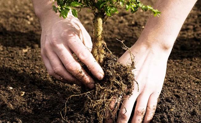 CTP ve AKEL temsilcileri ağaç dikecek