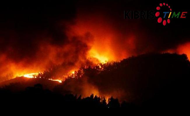 Portekiz'de orman yangını 39 can aldı