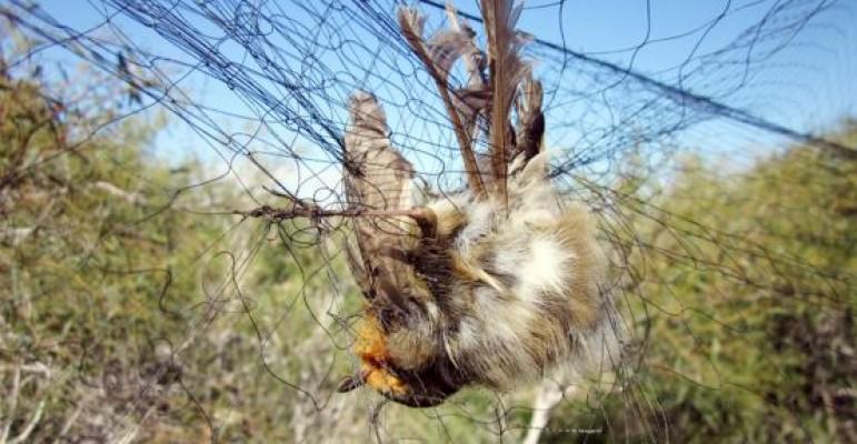 Güney Kıbrıs'ta 'pulya' savaşı...