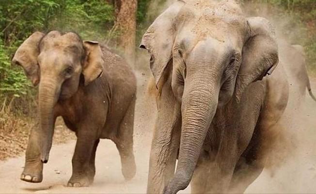 Bangladeş'te fil saldırısı... 4 Ölü!