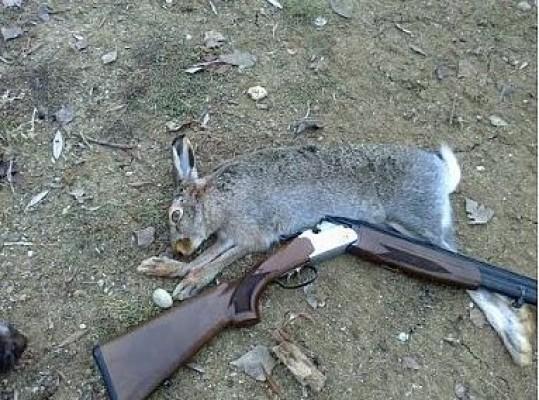 Kapalı bölgede ova tavşanı avladı!