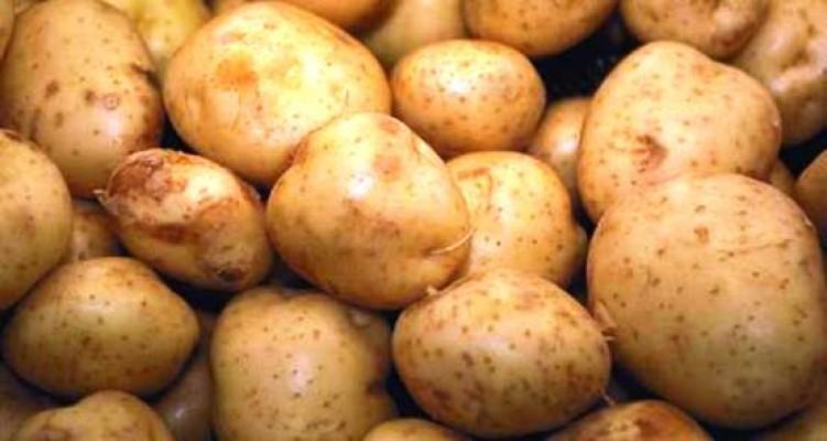 Patates ekim alanları için beyan süresi yarın son gün