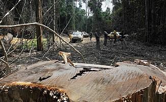 Brezilya'da çevre koruma büroları yıkıldı