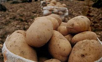 Güney'de KKTC patatesi tercih ediliyor...