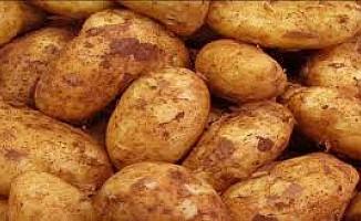 KKTC'den 3 günde 272 ton patates aldılar