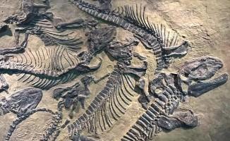 200 milyon yıllık dev dinozor fosili bulundu.