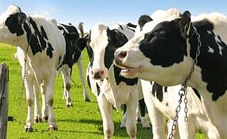 Hayvancılık Dairesi, Dilekkaya'da eğitim düzenliyor