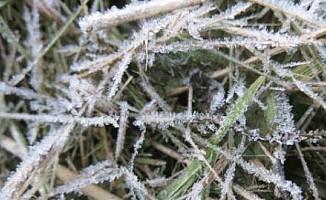 Yarın sabah don olayı bekleniyor...
