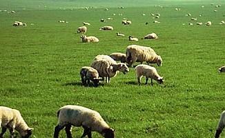 Arazilerde hayvan otlatma ve hasat artık güvenli