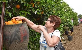 Turistler portakal topladı...