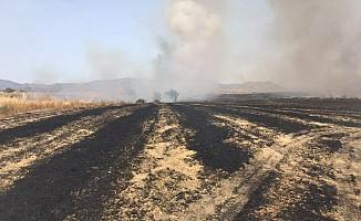 150 Dönüm biçilmemiş arpa yandı