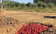 3 Bin 500 kg nar imha edildi