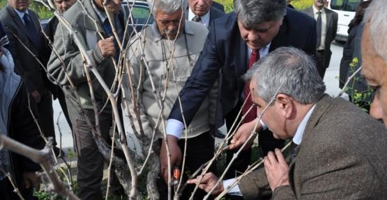 """""""UYGULAMALI BAĞ BUDAMA SEMİNERLERİ"""" DÜZENLENDİ"""
