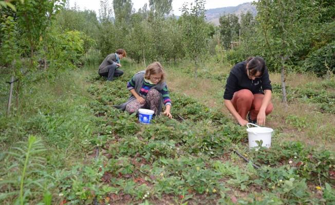Organik tarım yapmak isteyen üreticiler başvuru yapabilecek