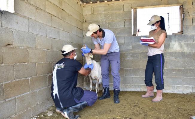 Hayvan Hastalıklarıyla Mücadelede birinci tur tamamlandı