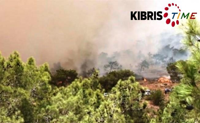 12 yılda 10 bin hektar yandı