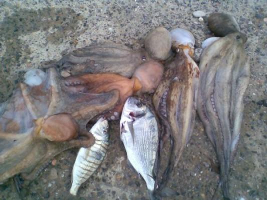 Kanunsuz avlanmaya yasal işlem