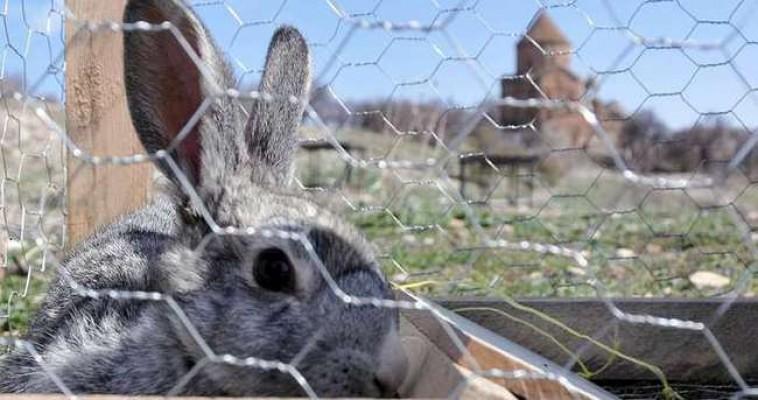 Tavşanlara tuzak kurmaktan tutuklandı