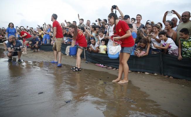 Caretta carettalar denize bırakıldı.
