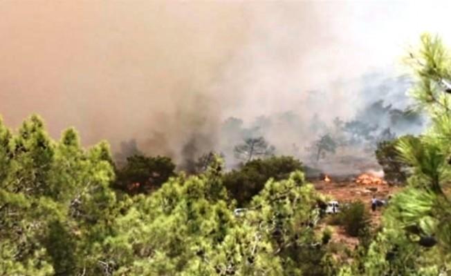 Cengizköy'de çıkan yangında 46 ağaç yandı