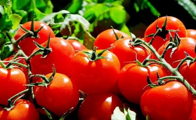 Tüketiciler Derneği domates boykotu başlattı