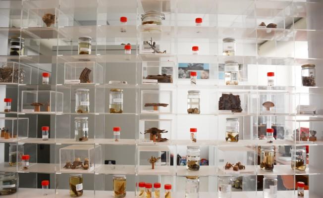 Herbaryum Müzesi Nisan'da açılıyor