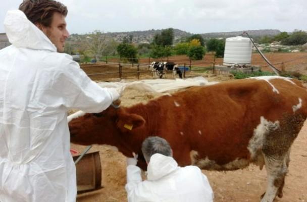 Veteriner Dairesi hayvan üreticilerini bilgilendirecek