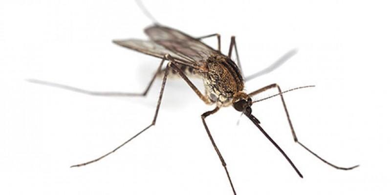 K.T. Belediyeler Birliği'nden sivrisinek uyarısı!