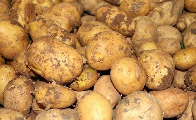 Patates üreticilerine ikinci kez itiraz hakkı...