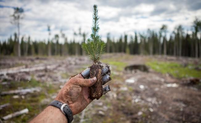 Güney Lefkoşa'ya 300 bin ağaç dikecekler...