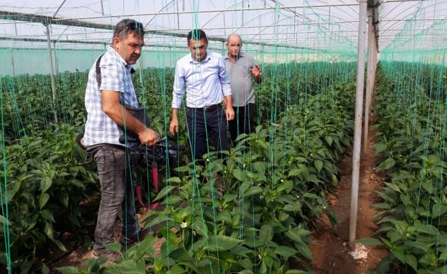 Bakan Oğuz sebze üreticilerini uyardı