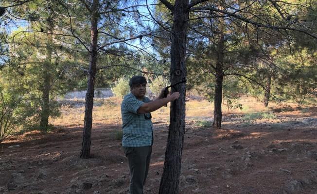 Salamis Ormanlarına kuş yuvası yerleştirilecek