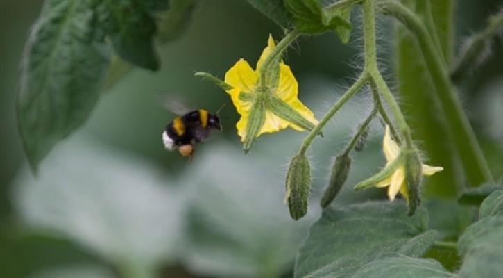 37 arı üreticisine ödeme yapıldı
