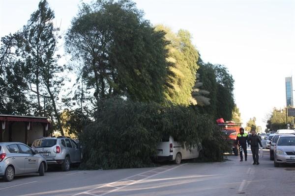 Lefkoşa'da fırtına ağaç devirdi..