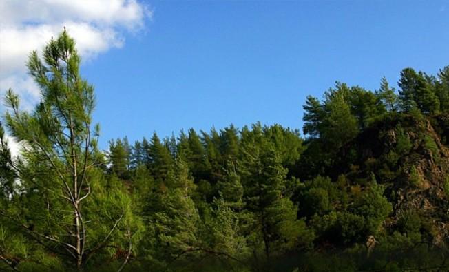 Türkiye'den KKTC ormanlarına 5 milyon TL'lik hibe
