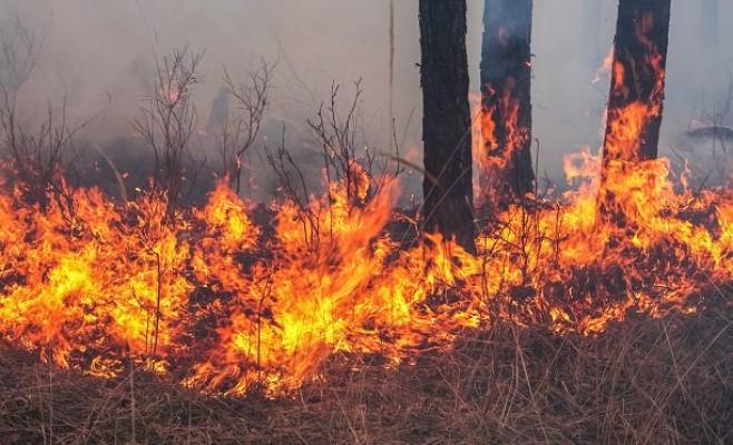 """""""Orman yangın riski çok yüksek"""""""