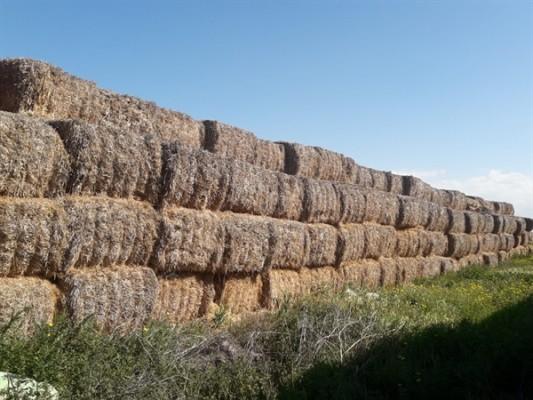 İhtiyaçlı üreticilere arpa sap balası satışına başlandı