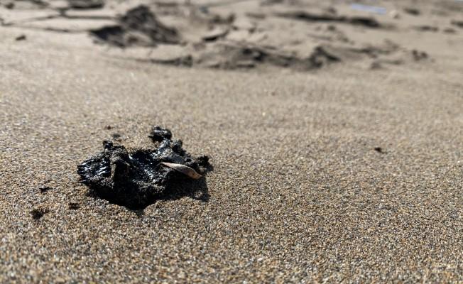 Kaplumbağaları Koruma Derneği'nden çağrı
