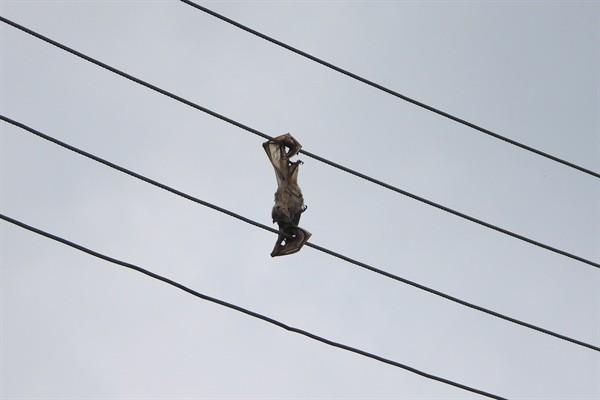 Yarasalar elektrik hattı kurbanı…