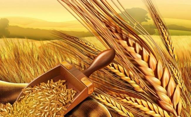 Arpa ve buğday fiyatları yeniden belirlendi