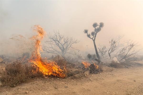 20 Çam ve 20 akasya ağacı tamamen yandı