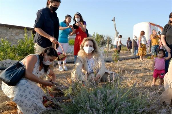 Sibel Tatar, lavanta hasadı etkinliğinin açılışını gerçekleştirdi