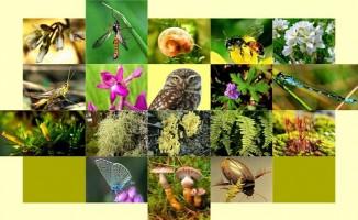 22 Mayıs Uluslararası Biyolojik Çeşitlilik Günü