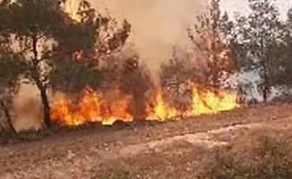 Dün 3 ayrı yerde daha yangın çıktı
