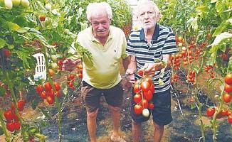 Paralimni'de çöpten sebze toplayan Rumlar görüldü...