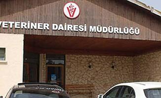 """Veteriner Dairesi'nden """"itlaf"""" açıklaması..."""