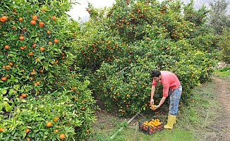Ülkeye gelecek  tarım işçilerinin karantina konusu gündemde...