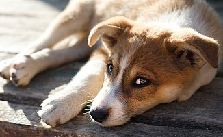 LAÜ' den Güzelyurt Hayvanları Koruma Derneği'ne bağış