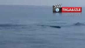 Karpaz'da balina sürüsü